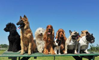De Comunidad Valenciana heeft 738 núcleos zoológicos en 1,2 miljoen huisdieren geregistreerd staan