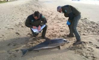Dode dolfijn gevonden op strand Tarragona