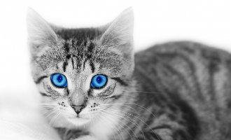 Video's om de Internationale dag van de kat te vieren, ook in Spanje