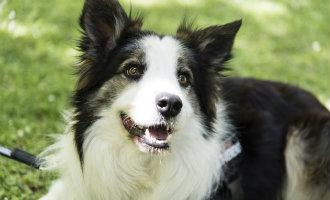 Leer Albatrox kennen, de hond die in Zaragoza het leven redt van andere dieren door gif op te sporen
