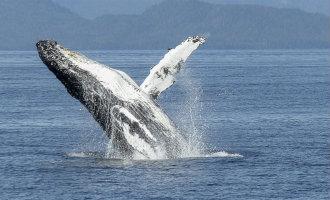 De Beste Plaatsen Om Walvissen Te Kijken In Spanje