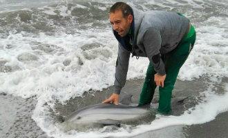 Levende Jonge Dolfijn Gevonden Op Het El Morche Strand Van De Kustplaats Torrox In Málaga