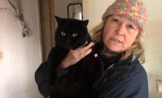 78 Katten Ontdekt Bij Huisuitzetting Nederlander In Girona