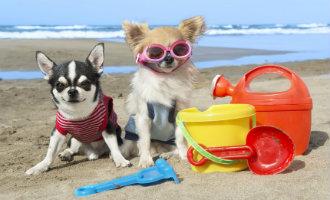 Hondeneigenaren Marbella Kunnen Deze Zomer Naar Twee Nieuwe Hondenstranden Gaan