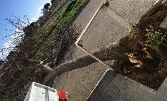 Festiviteiten Salou geannuleerd nadat twee personen zwaargewond raakten door vallende boom