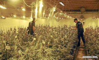 Marihuana Kwekers Zorgen Voor Stroomuitval In Catalaans Dorp In Girona