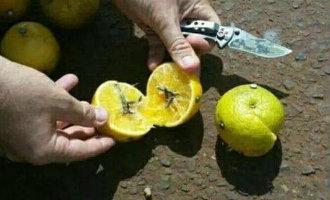Spaanse Politie Waarschuwt Voor Nep Berichten Over Beroving Met Spijker-citroenen