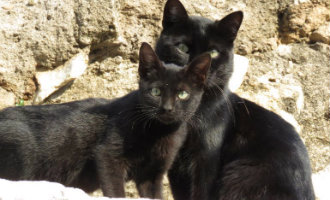 """Tarragona is vanaf nu een """"katvriendelijke"""" stad"""