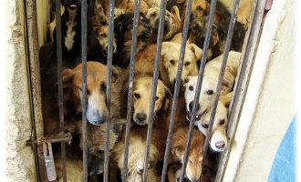 Steeds meer illegale honden en katten opvangcentra in Spanje