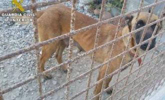 Aangehouden in Almería voor het verwaarlozen van 19 honden