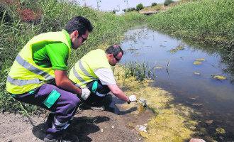 Leerlingen niet naar school vanwege muggenplaag in Guadalhorce vallei Málaga