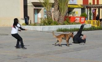 Politieke partij Valencia wil honden inzetten om vrouwen te beschermen tegen partnergeweld