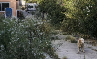 Honden eten lichamen van hun overleden baasjes op in Llucmajor op Mallorca