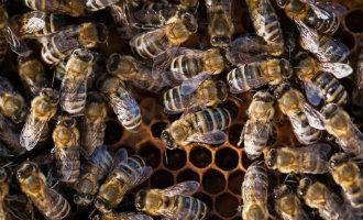 70-jarige Noorse wandelaar om het leven gekomen na bijensteken in Mijas