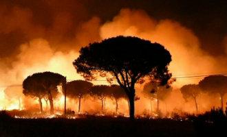 Meer dan 2.000 personen geëvacueerd vanwege grote bosbrand Doñana natuurpark in Andalusië