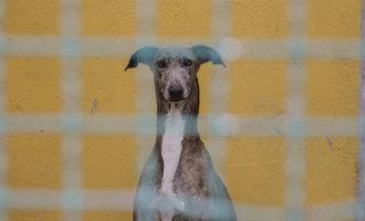 Boetes tot 5.000 euro voor het redden van op straat levende dieren in de deelstaat Galicië