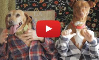 """Opvangcentrum Madrid bedenkt een andere versie van """"despacito"""" met honden in de hoofdrol (video)"""
