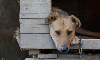Het aan de ketting leggen van honden is niet meer toegestaan in de deelstaat Galicië