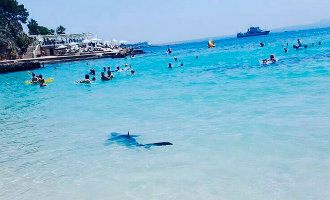 Twee meter lange haai zwemt tussen toeristen bij strand Mallorca (video)