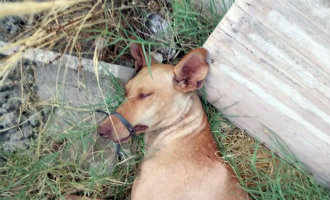 Wandelaars vinden vastgebonden en in de zon liggende hond in Níjar Almería