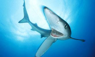 Toerist lichtgewond na aanvaring met een twee meter lange haai bij Mallorca