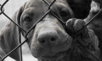 Er werden vorig jaar in Spanje meer dan 137.000 honden en katten in de steek gelaten