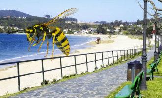 Strand in A Coruña in Galicië ontruimt vanwege grote zwerm wespen