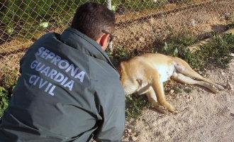 87 personen in 126 onderzochte gevallen van dierenmishandeling vorig jaar in de Comunidad Valenciana