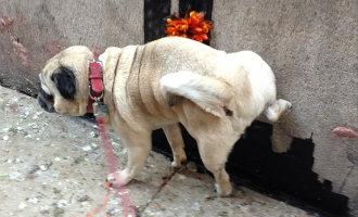 Gemeente Alicante geeft water en zeep aan hondeneigenaren om de plas schoon te maken