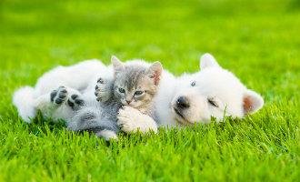 Meest voorkomende honden en katten namen in Spanje
