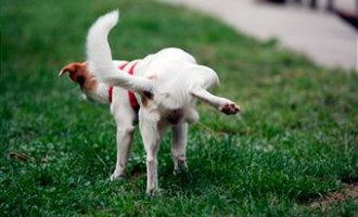 Hondeneigenaren kunnen bekeuring krijgen als hond op straat plast in de Catalaanse stad Mataró