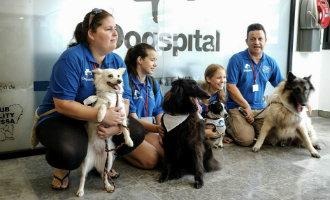 Honden mogen vanaf nu ook hun baasjes opzoeken in het ziekenhuis op Ibiza