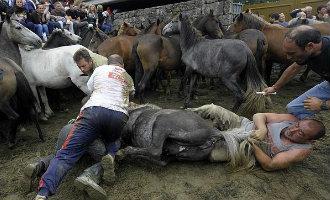 Traditie en cultuur of paardenmishandeling: het Rapa das Bestas feest in Galicië