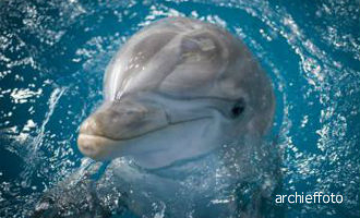 Toeristen hebben geluk nadat een groep dolfijnen met de excursieboot mee zwom nabij Salou (video)