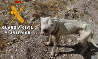 Guardia Civil redt gewonde, ondervoede en zieke Argentijnse Dogo puppy in Almería