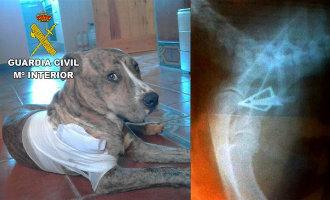 Man schiet met pijl en boog op de hond van een buurvrouw toen deze zijn terrein op kwam in Castellón