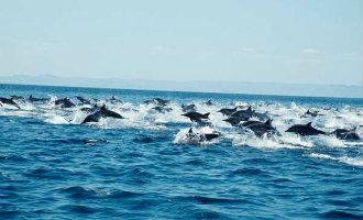 Dit is geen documentaire maar de dolfijnen voor de kust van Almería