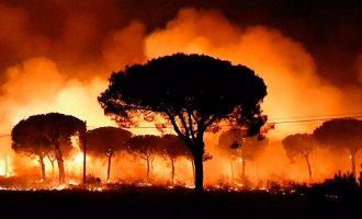 Aantal door bosbranden verwoeste natuur nu al meer dan vorig jaar in Spanje