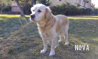 Redactie SpanjeVandaag rouwt om dood trouwe viervoeter Nova