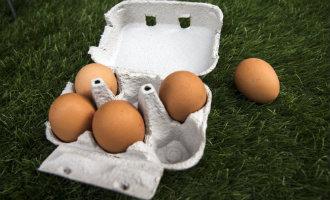 Opnieuw partij eieren met fipronil afkomstig uit Nederland gevonden in Catalonië