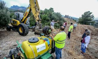 """Dankzij de """"ebola van de bomen"""" bacterie zouden alle olijfbomen op Mallorca moeten verdwijnen"""