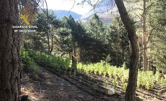 Meer dan 3.000 marihuana planten gevonden middenin Sierra Nevada natuurpark