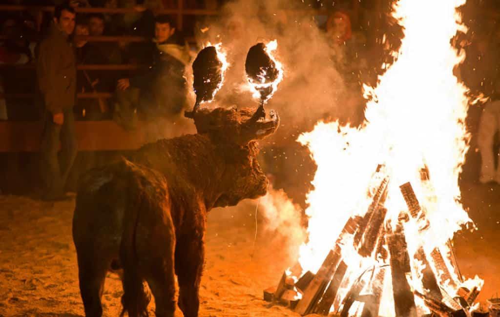 Spaanse Partij voor de Dieren eist einde aan brandende stierenfeest in Soria