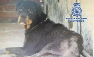 Politie arresteert in Málaga een vrouw voor mishandeling en verwaarlozing hond