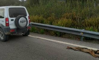 Man die in Cádiz een hond achter auto de dood in sleurde niet schuldig bevonden door rechter