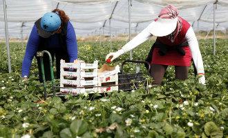 Spaanse fruittelers zoeken 16.000 seizoensarbeiders in Marokko