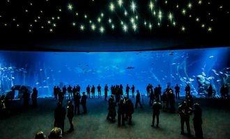 Spanjevandaag nieuws spanjevandaag for Aquarium poema del mar