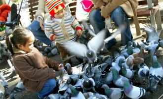 Barcelona verbiedt de verkoop van duivenvoer op de Plaça Catalunya