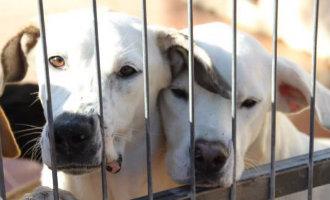Lokale politie Torrevieja heeft genoeg van het redden van loslopende en in de steek gelaten honden
