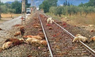 Trein zorgt voor een bloedbad na aanrijding tientallen op het spoor loslopende schapen nabij Cambrils